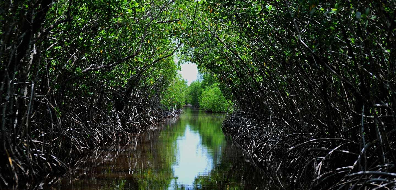 mangrove-tunnels