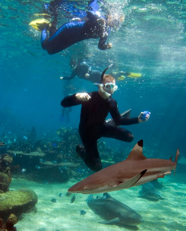 people diving with sharks